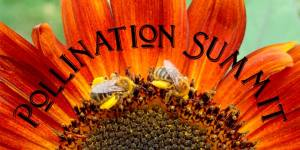 pollination summit